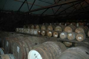 Bruichladdich warehouse Barrels sleeping